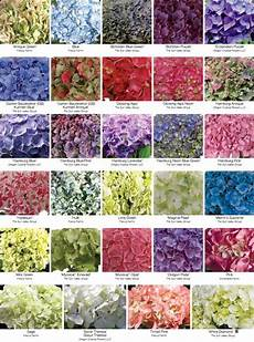 Plant Color Chart Florists Review Magazine 174 Your Monthly Magazine For