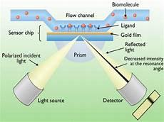 Surface Plasmon Resonance Surface Plasmon Resonance Spr Service Pronalyse