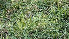 Fescue Hay New Study Don T Graze Fescue To The Ground Hay And