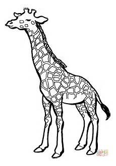Ausmalbilder Drucken Giraffe Ausmalbild Giraffe 4 Ausmalbilder Kostenlos Zum Ausdrucken