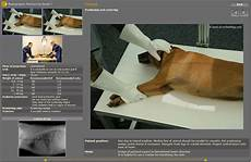 Veterinary Radiographic Positioning Chart Digital X Ray Acquisition And Control Software For