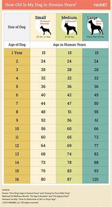 Puppy Age Chart At What Age Does A Dog Stop Being A Puppy Quora