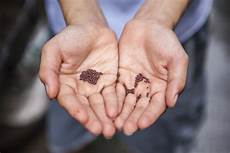 Mustard Seed Size Chart Mustard Seed Size Faith Pen 4 The Lord