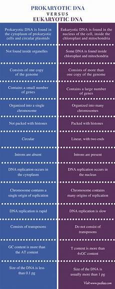 Difference Between Prokaryotic And Eukaryotic Difference Between Prokaryotic And Eukaryotic Dna