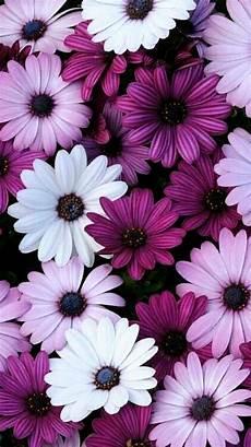 iphone x flower wallpaper hd flower iphone wallpapers top free flower iphone