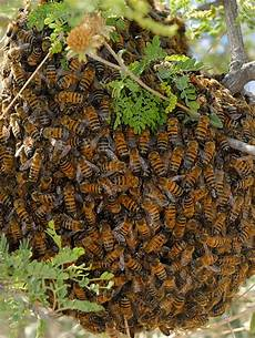 Honey Bee Pictures