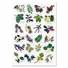 Tree Leaves Chart Tree Leaves A5 Identification Card Chart Postcard New Ebay