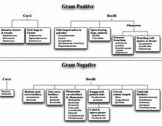 Gram Positive And Gram Negative Bacteria Chart Gram Negative Gram Positive Bacteria List Google Search