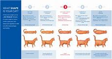 Baby Kitten Age Chart Cat Weight Chart Png 1473 215 784 With Images Cat Weight