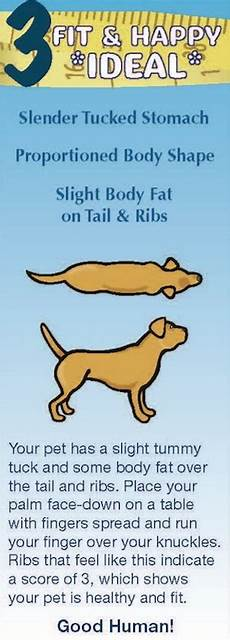 Ideal Weight For Dogs Weight Chart How To Tell If Your Pets Are Overweight