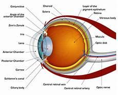 How Light Enters The Eye How The Human Eye Works Cornea Layers Role Light Rays