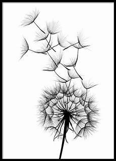 desenho de dandelion no2 poster