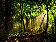 Rainforest Background Beautiful Rainforest Backgrounds Wallpaper Amp Pictures
