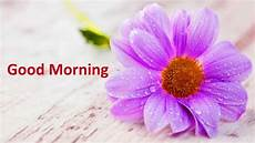 flower wallpaper with morning morning flowers images free pictures