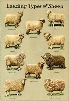 Natural Wool Its Characteristics Manufacturing Process