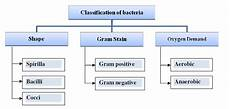 Classification Of Bacteria Chart Classification Of Bacteria Download Scientific Diagram