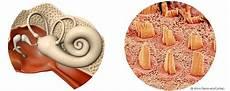 dermatite nell orecchio interno enrico manzi sai cosa c 232 dentro il tuo orecchio