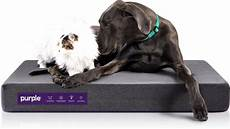 beds pet beds small to large purple