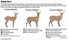 Deer Antler Age Chart Aging Deer Based On Photos What Do You Look For Texags