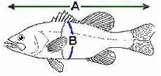 Northern Pike Length Girth Weight Chart Deep How Much Does Your Fish Weigh