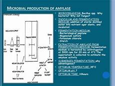 Flow Chart Of Amylase Production Ppt Production And Application Of Amylase Powerpoint