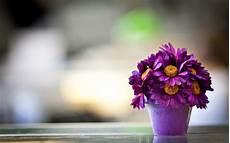 live flower wallpaper for desktop free beautiful purple flower pot macro