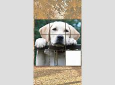 Cute doggy games:dog puzzles, matching pairs, dog pictures