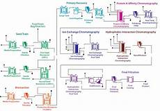 Bioprocess Flow Chart Protein A Chromatography Cost Estimation An In Silico