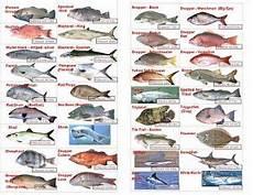 Florida Fish Id Chart Florida Saltwater Fish Chart Amulette