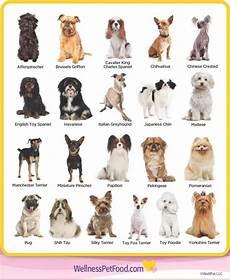 Dog Name Chart 25 Beautiful Dog Species Name