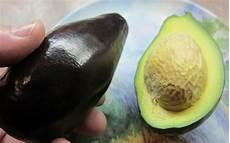 Different Types Of Avocado Tropical Fruit Trees Avocado