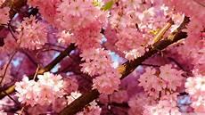 aesthetic flower desktop wallpaper aesthetic flower wallpapers top free aesthetic flower