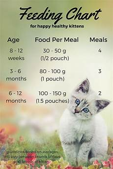 How Much To Feed A Cat Chart Feeding Your Kitten Helpful Kitten Feeding Schedules And