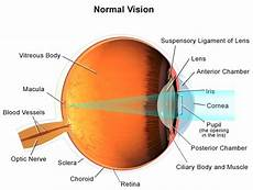 How Light Enters The Eye Normal Vision