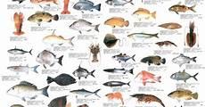 Shellfish Chart Seafood Chart Http Www Craigmarine Info Images