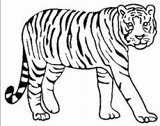 and tiger coloring pages at getcolorings free