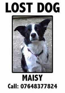 Lost Dog Poster Maker Make Your Lost Dog Poster More Effective Dog Blog