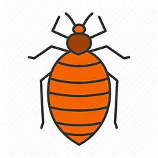 bed bug bedbug beetle insect parasite pest icon