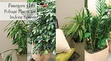 Low Light Stem Plants Indoor Foliage Plants Hardy Houseplants Care