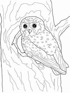 Free Owl Coloring Pages Owl Coloring Pages
