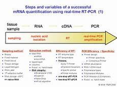 Chart Method Pcr Example Gene Quantification Amp Optimisation Real Time Kinetic Pcr