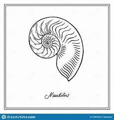 Collection Of Hand Drawn Greetings Words Nautilus Half Seashell Black And White Square Card Hand