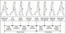Gait Cycle Gait And Gait Aids Musculoskeletal Key