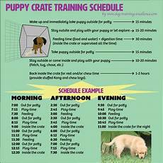 Puppy Exercise Chart Puppy Feeding Schedule Look At The Chart Follow The Tips