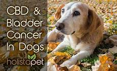 Bladder Cancer Dogs Cbd And Bladder Cancer In Dogs Holistapet
