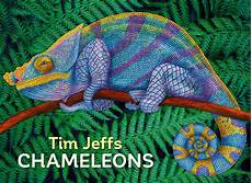Jeffs Color Chart Tim Jeffs Chameleons Boxed Notecard Assortment