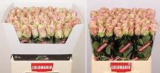 fresco flowers news archieven fresco flowers we check pack and supply