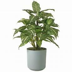 Low Light Pet Safe Indoor Plants 18 Best Low Maintenance Pet Friendly House Plants Gardenoid