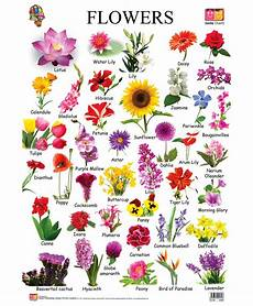 Flower Chart With Names And Pictures Flower Chart Each Flower Speaks For Itself Description