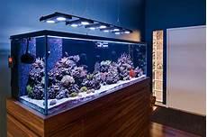 Saltwater Fish Tank Lights Lighting Gallery Aquarium Fish Tank Saltwater Fish